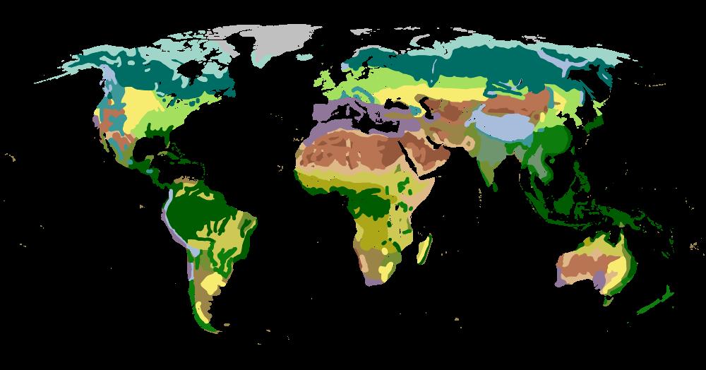 Thảm thực vật là gì