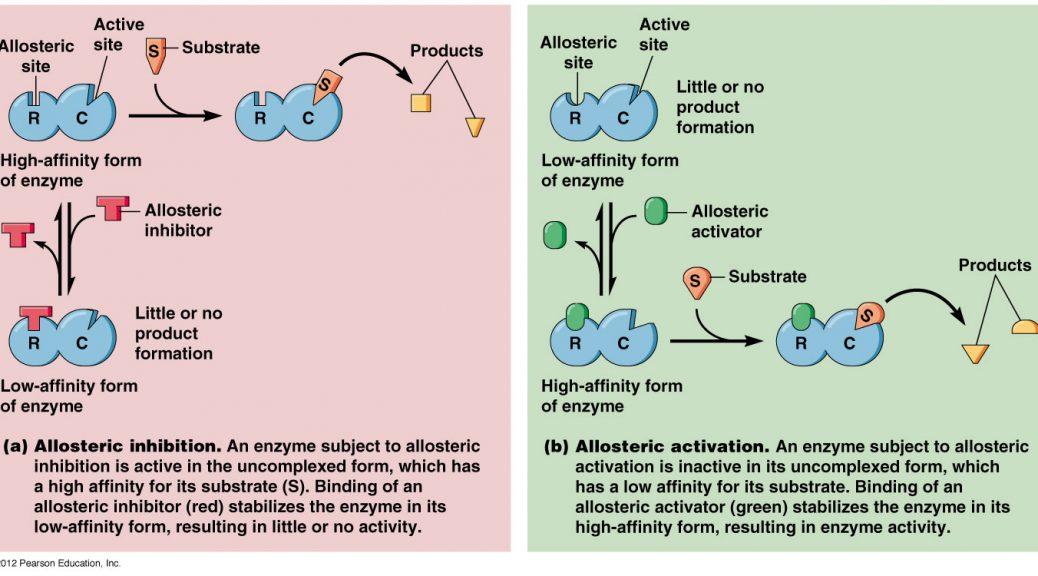 Allosteric là gì