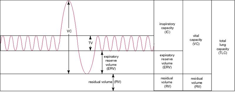 Tidal volume là gì