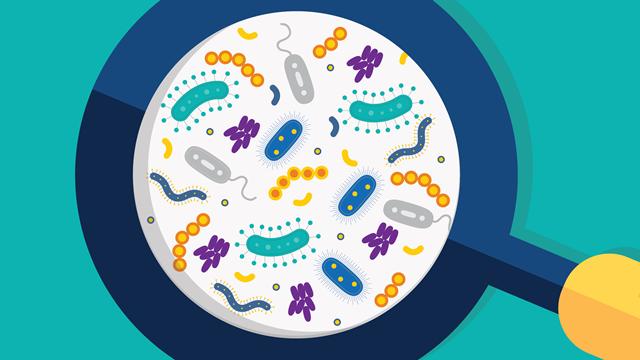 Microbiota là gì