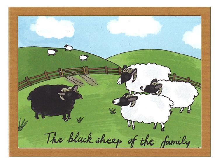 Black sheep là gì