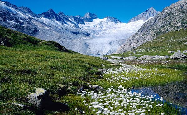 Alps là gì