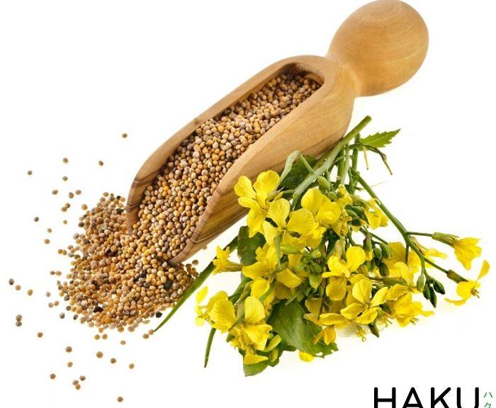 Mustard là gì
