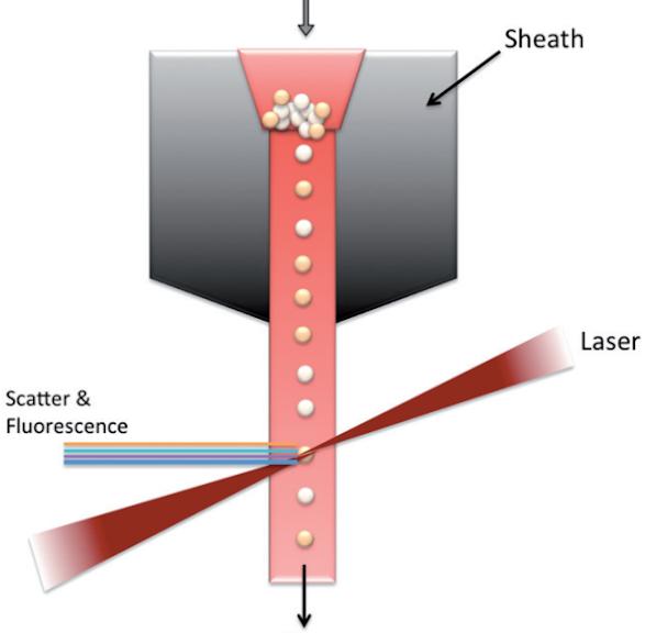 Flow cytometry là gì